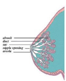 Origin of Pimple on Nipple