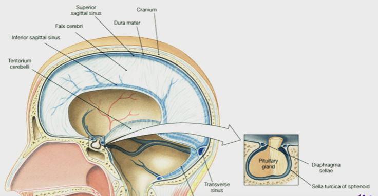 Sella Turcica - Bone, Function, Site, Location, Anatomy ...